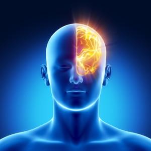 Left hemisphere concept